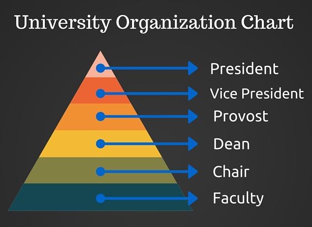 university organization chart